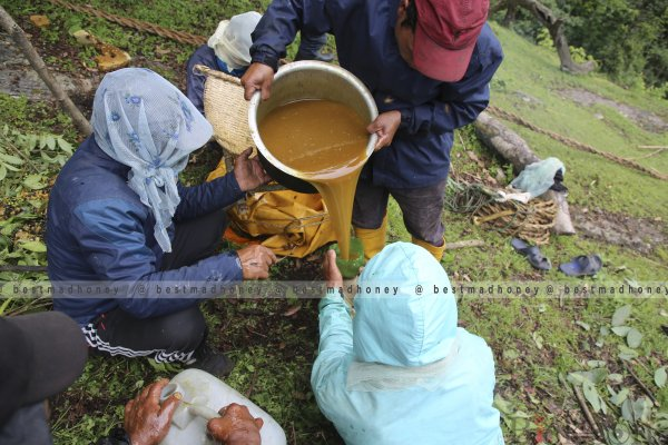 Honey Hunting in Nepal